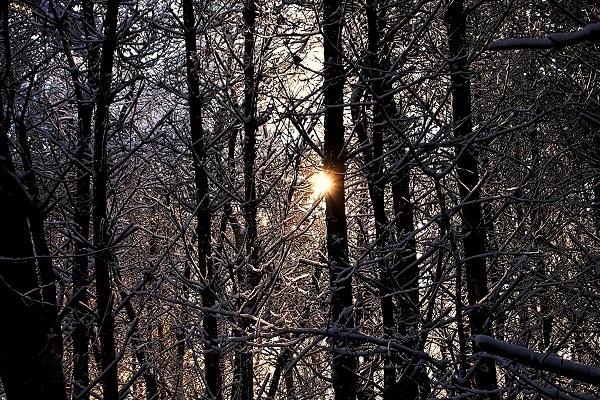oud-en-nieuw-retraite-7-bos-sneeuw-zon