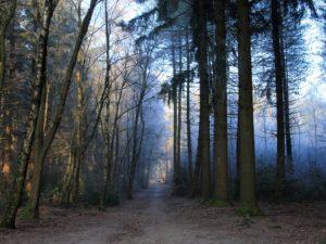 kerst retraite meditatie in het bos