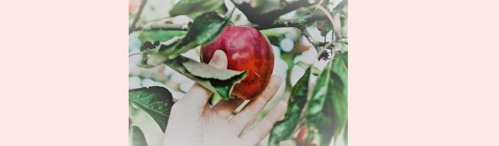 klesha – de 5 belemmeringen op je yogapad